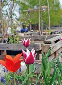 Frühling im Mauergarten. Foto: Joanna Wilgorska